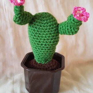 саксия с кактус